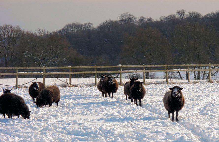 Lower Bassibones in the Winter 2009 & 2010 (86)